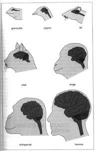 embryons_cerveau195