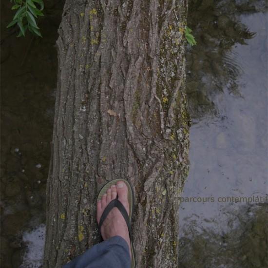 Marcher sur l'arbre