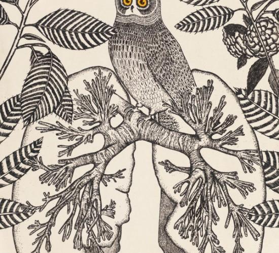 couverture-Le-trou-dans-l-arbre---Yann-Desbrosses
