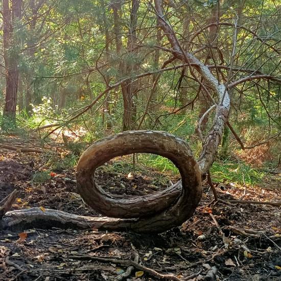 2021 10 photo arbre circulaire Thibault Bleau